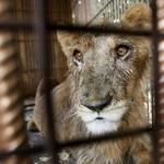 Идет борьба за достойное содержание диких животных